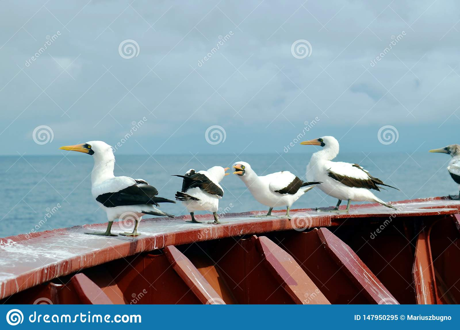 Seabirds seating on deck of cargo ship.