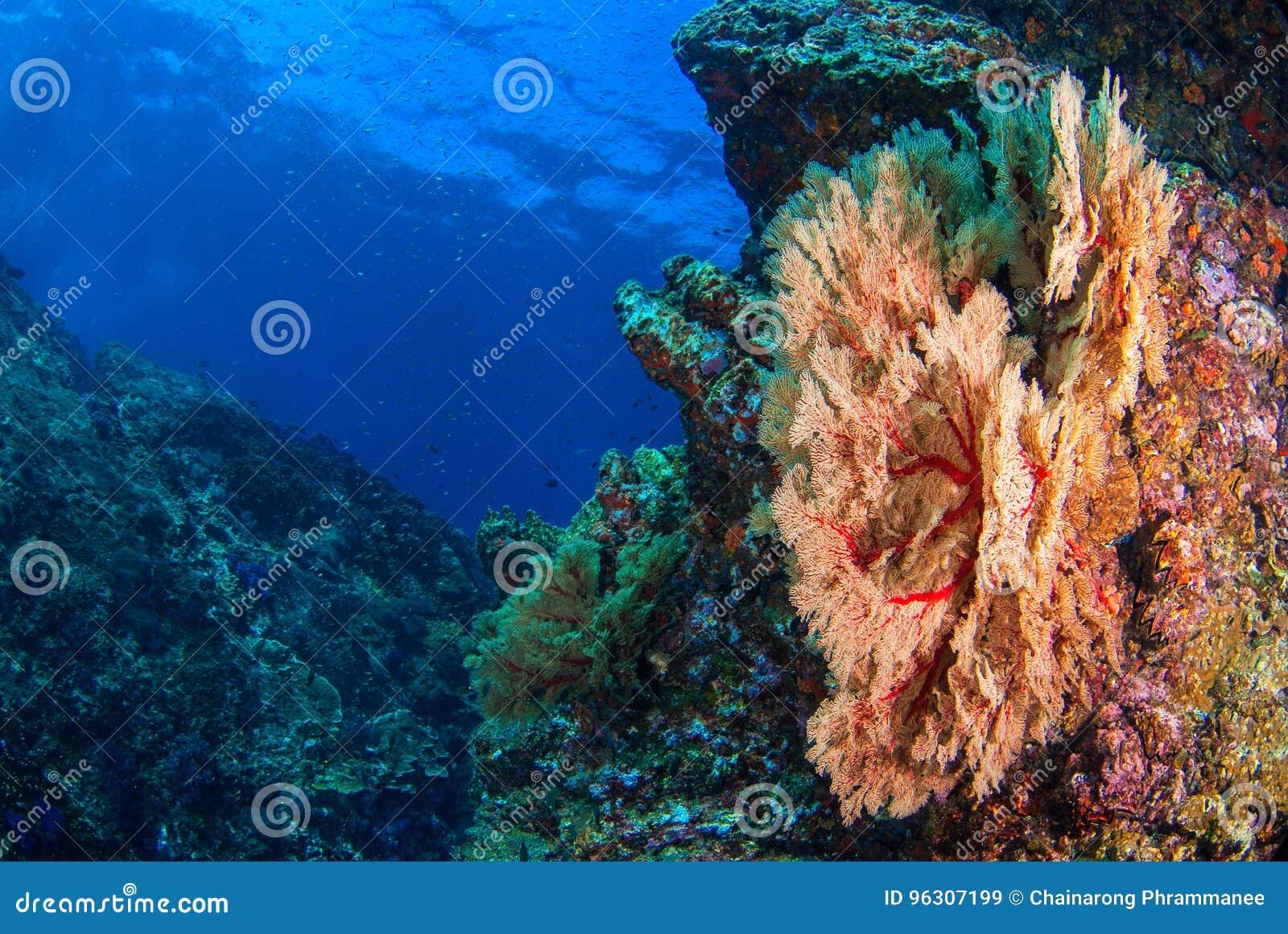 Seafan sous-marin