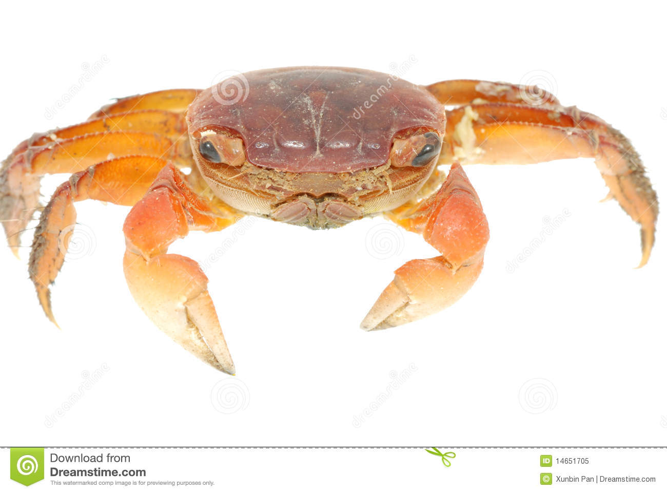 Crab macro crustacean claw seafood food fresh for Animals that are included in the cuisine of seafood