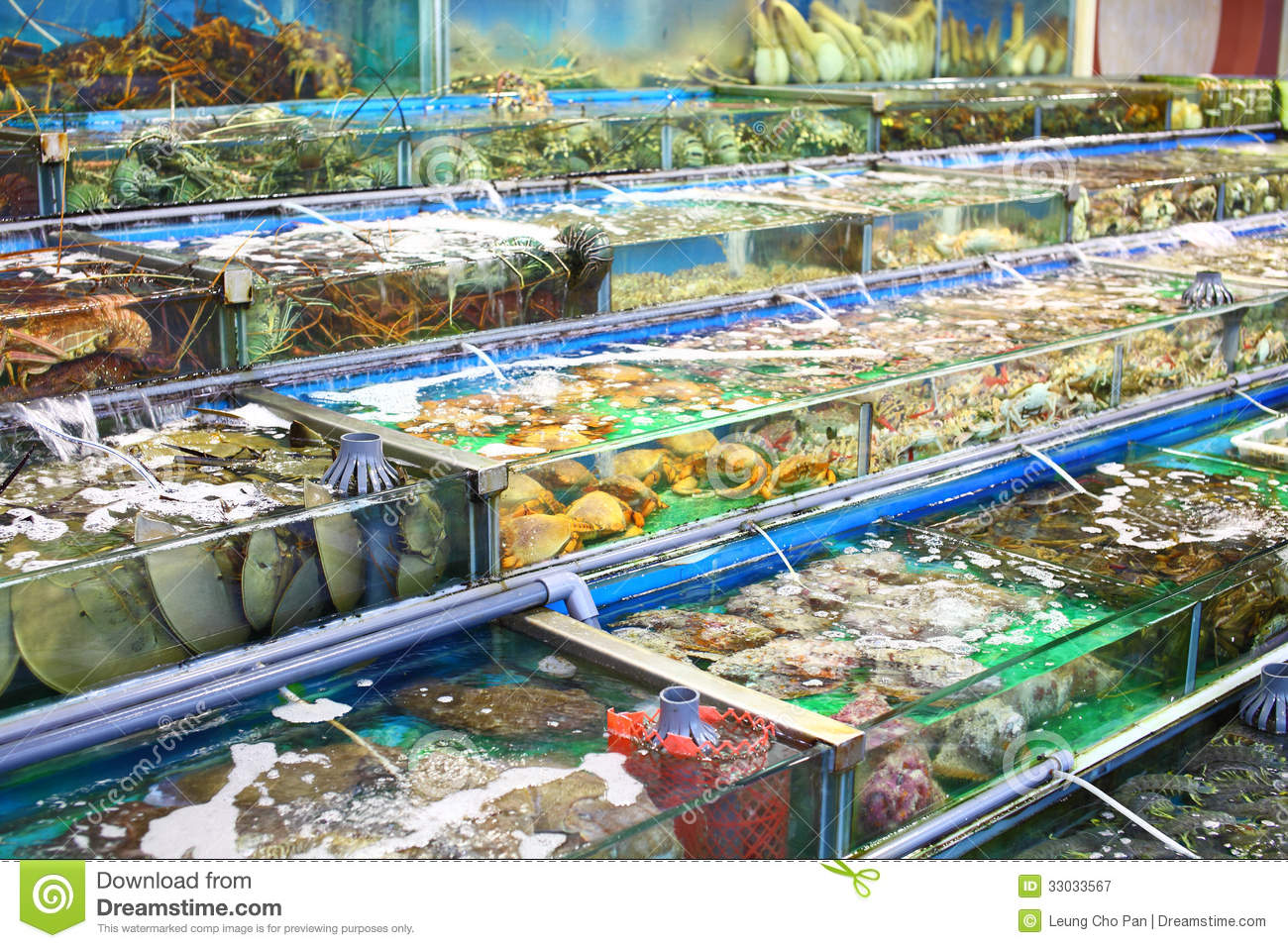 business plan for seafood market