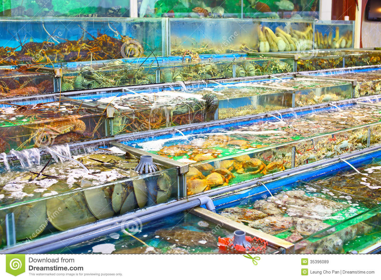 seafood market fish tank stock image image of shell
