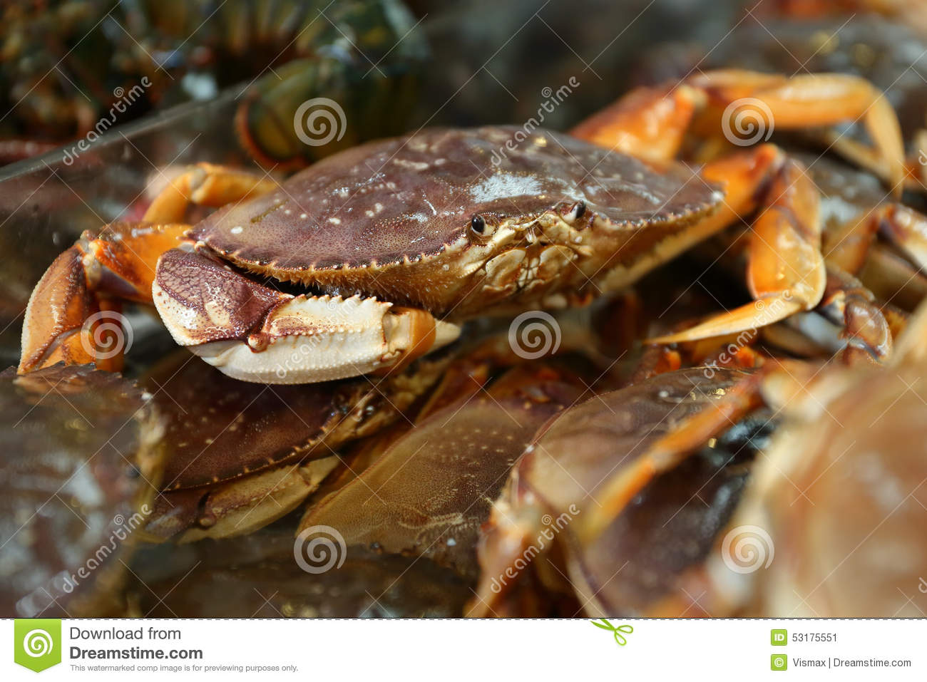 Seafood Market Live Dungeness Crabs Stock Image - Image of