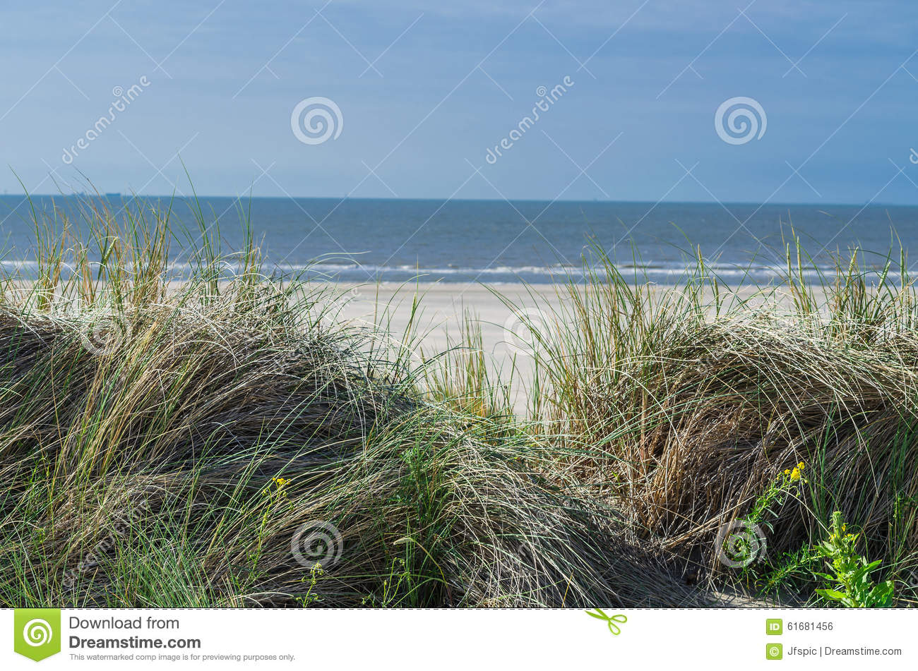 Seagrass beach and sand dunes stock photo image 61681456 for Seagrass for landscaping
