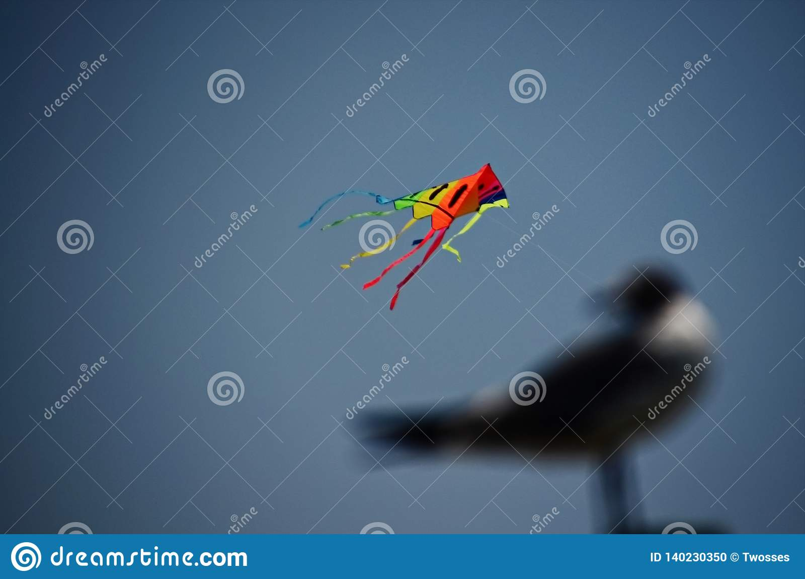 Seagull που πετά έναν ικτίνο