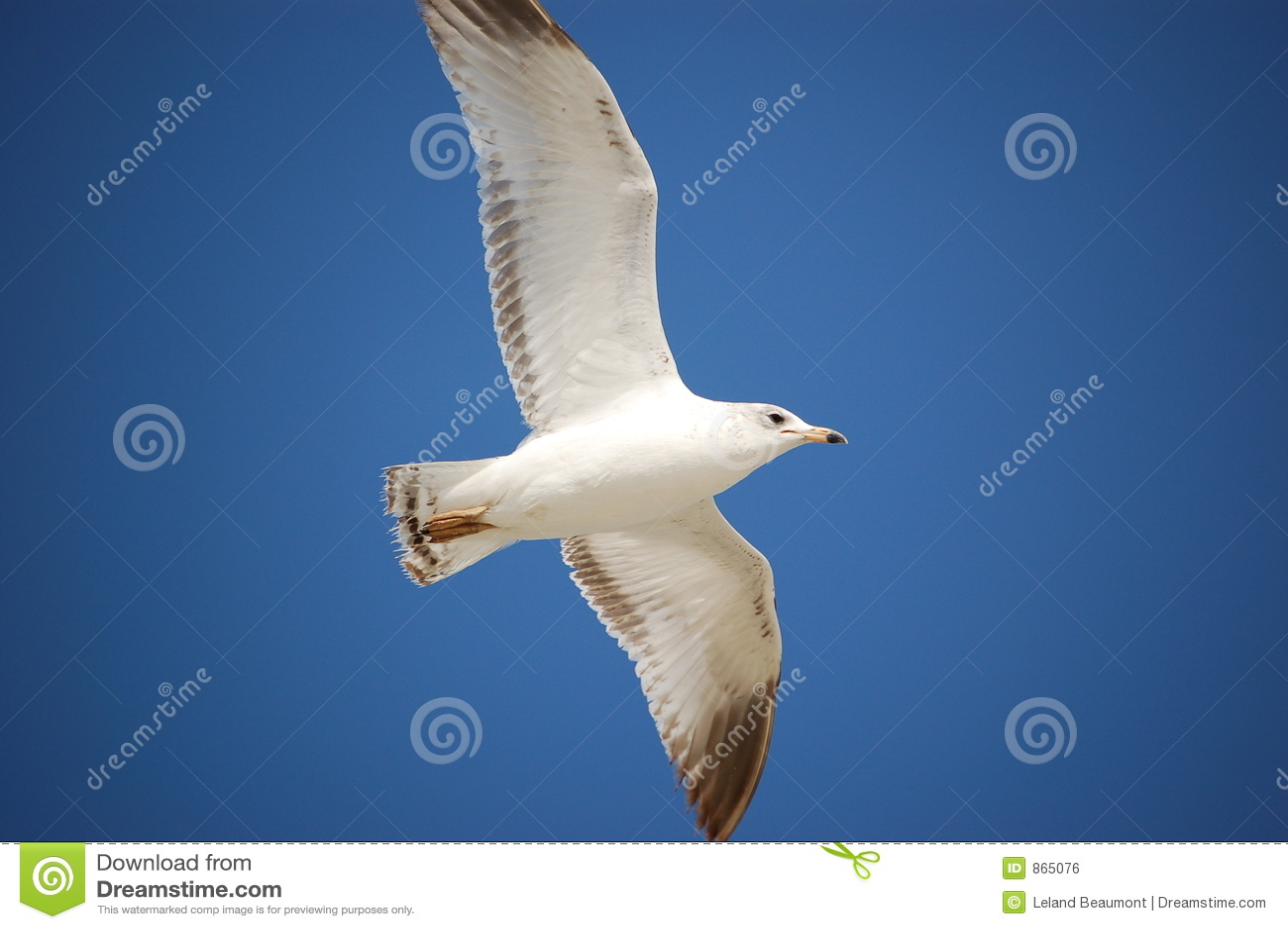 Seagull ανύψωση