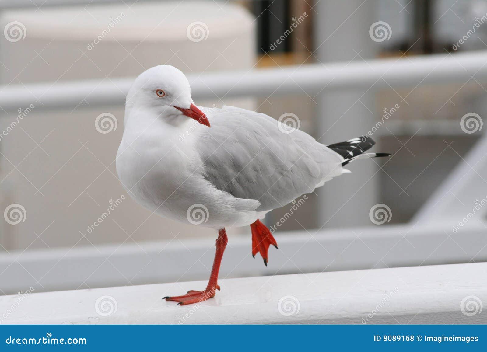 Teen καταστράφηκε από μεγάλο πουλί