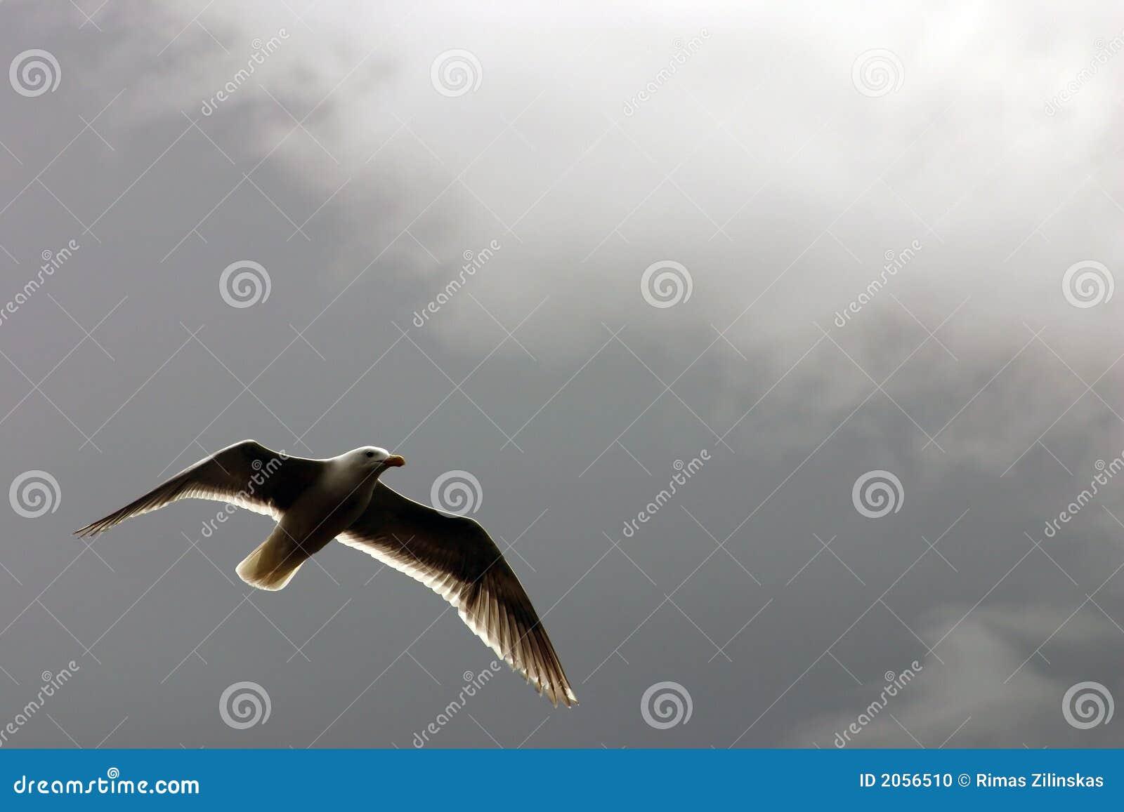 Seagull ονείρου