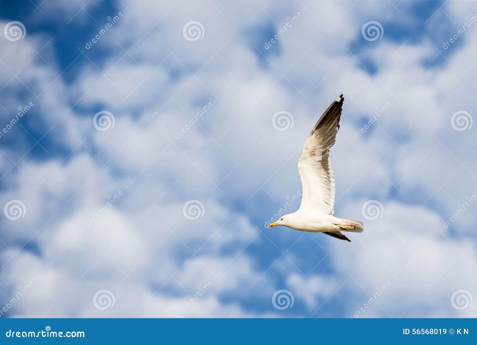 Download Seagull που πετά στο αριστερό σε έναν μπλε ουρανό με τα άσπρα σύννεφα Στοκ Εικόνα - εικόνα από κοίταγμα, μύγα: 56568019