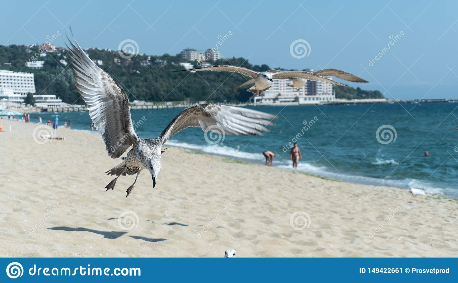 Seagull στην παραλία, Μαύρη Θάλασσα