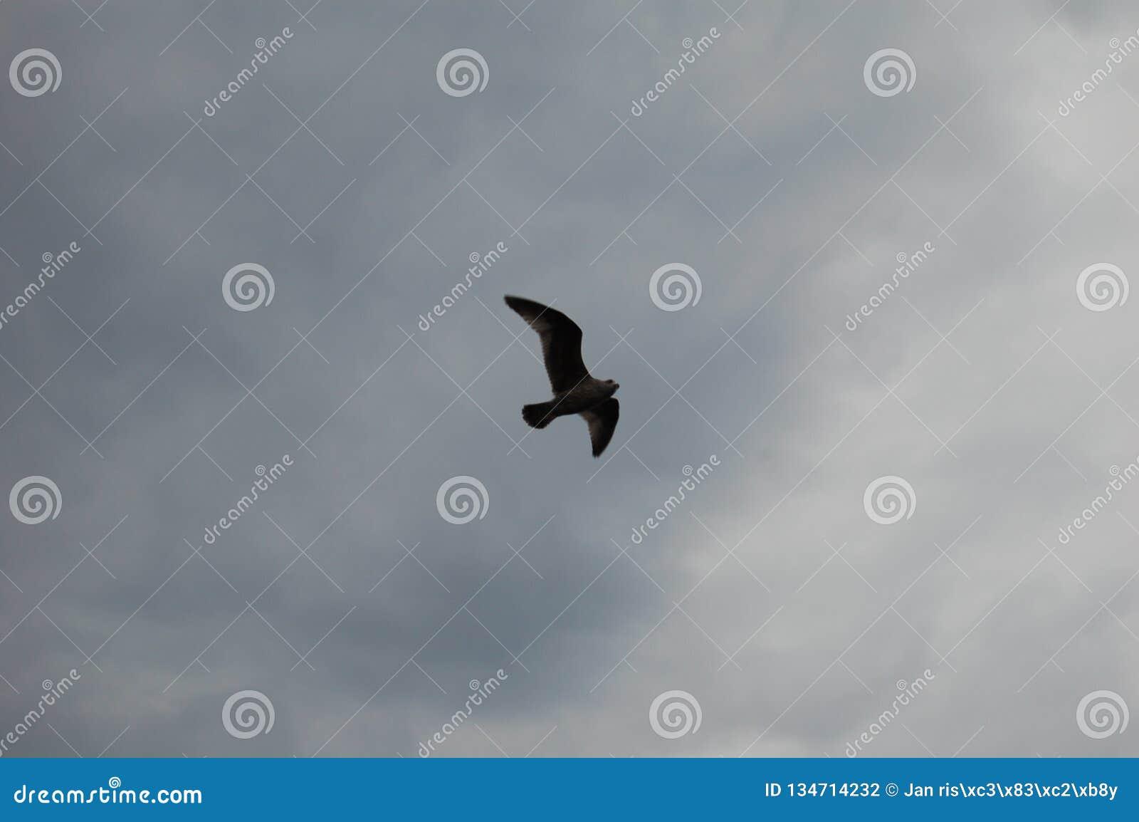 Seagull στους ουρανούς