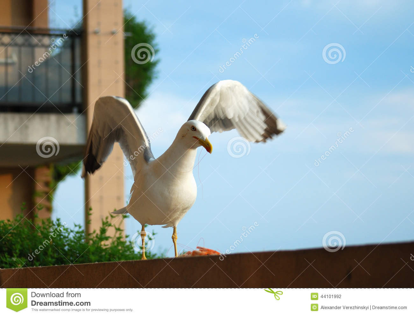 Seagull στο μπαλκόνι