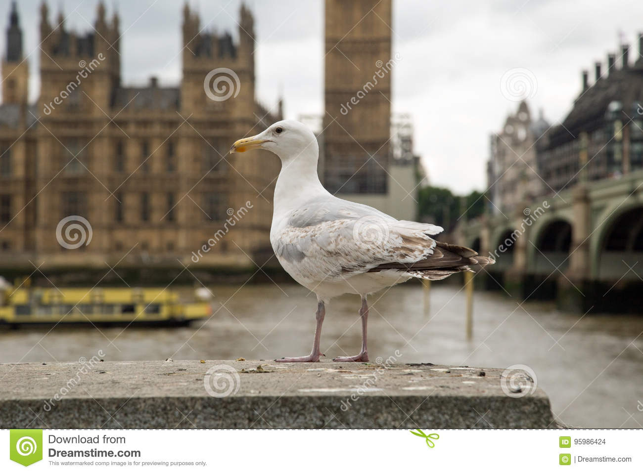 Seagull against a background of the UK houses of parliament