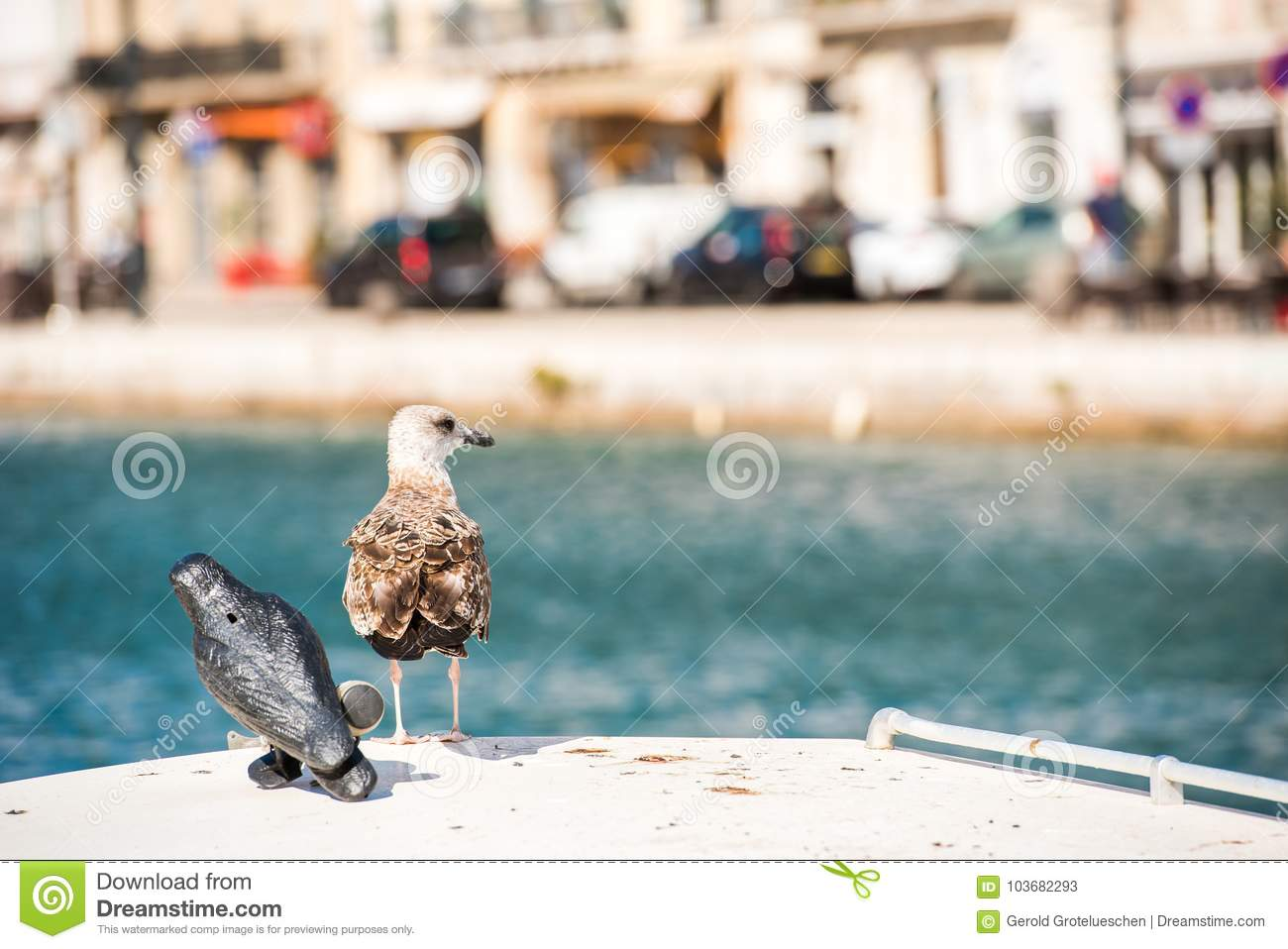 Seagull on the background of the royal canal in Sete, Languedoc Roussillon, France. Copy space for text.