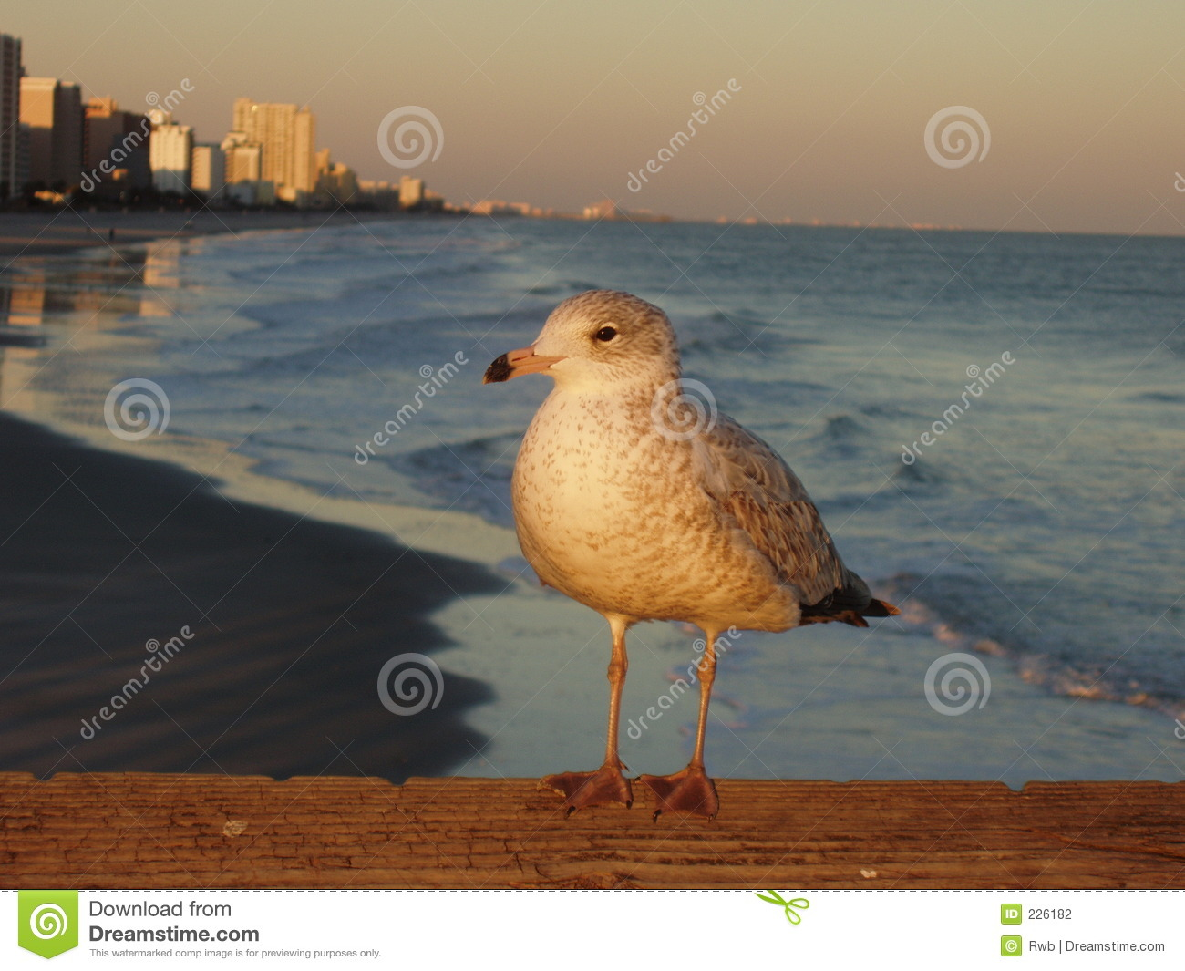 Download Seagull at the Beach stock photo. Image of seagull, pier - 226182