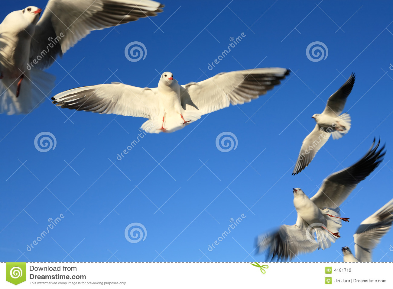 Stock Photography Seagull Birds Flying Image4181712