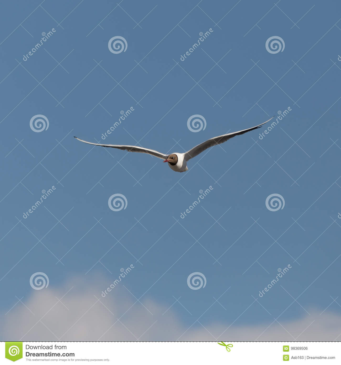 Seagull in the blue sky