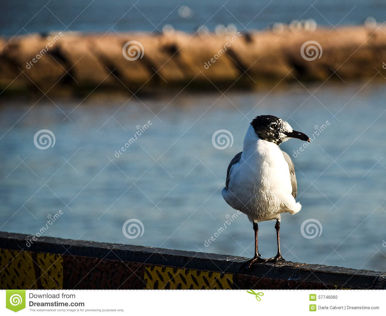 Seagull on Boat