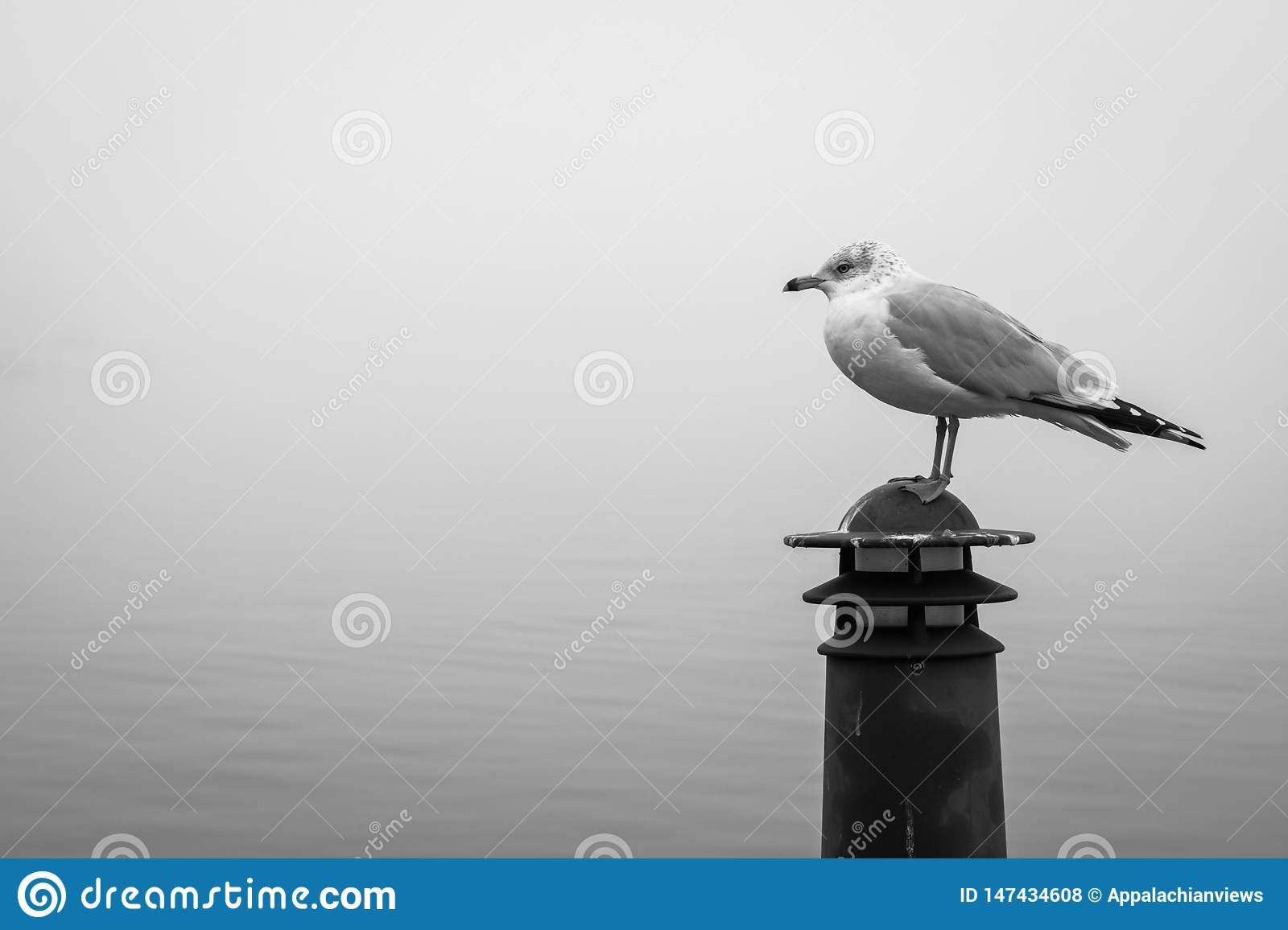 Seagull in Fells Point, Baltimore, Maryland