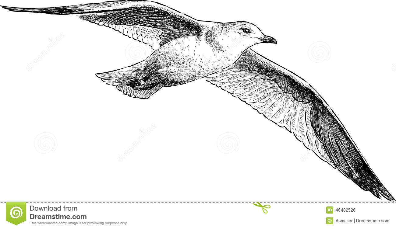 Holy spirit dove additionally Bat Coloring Pages further Chibi Toothless 177106777 together with BiarnLMBT together with Flying Bats. on flying bird outline