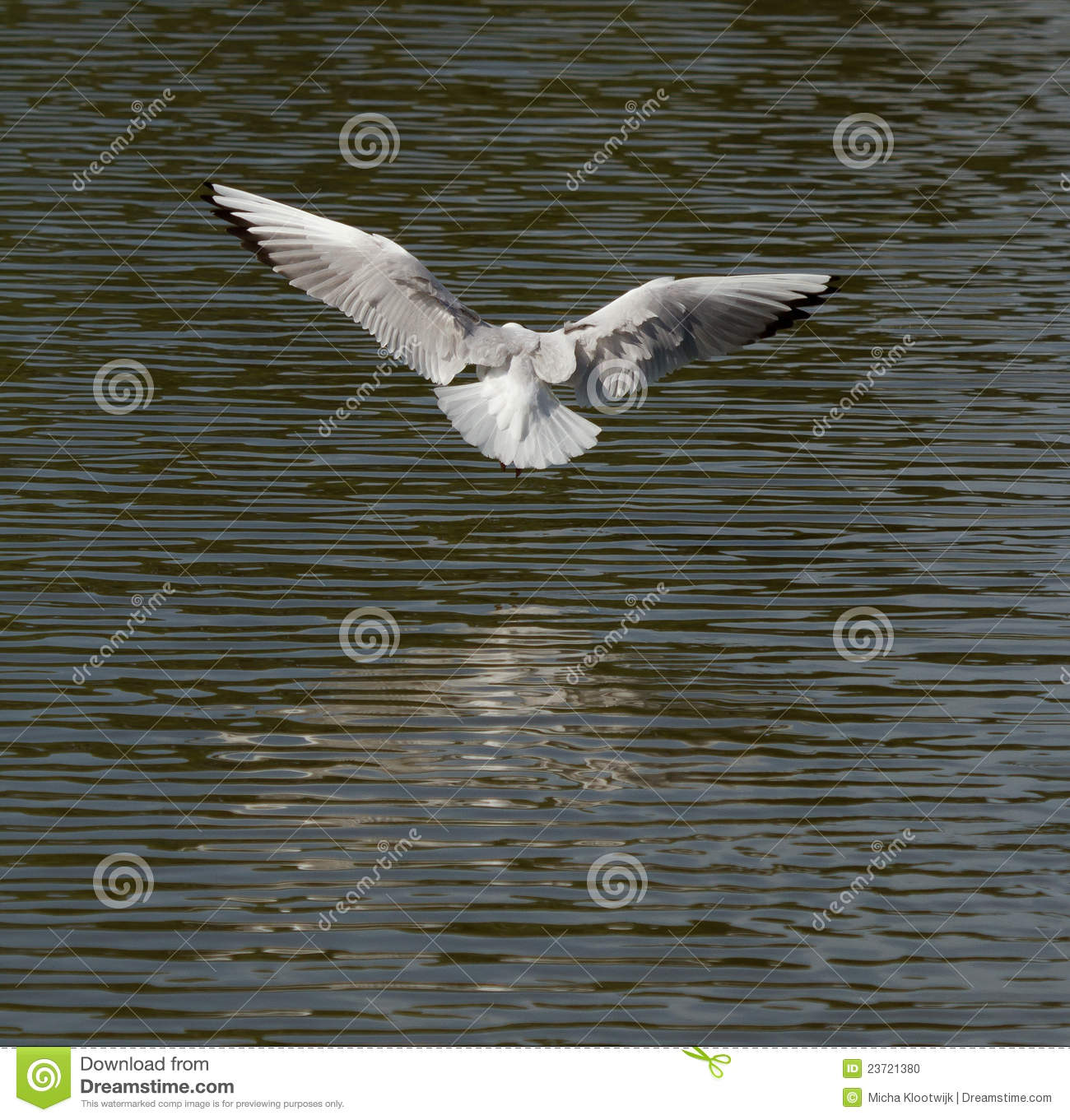 A seagull is flying