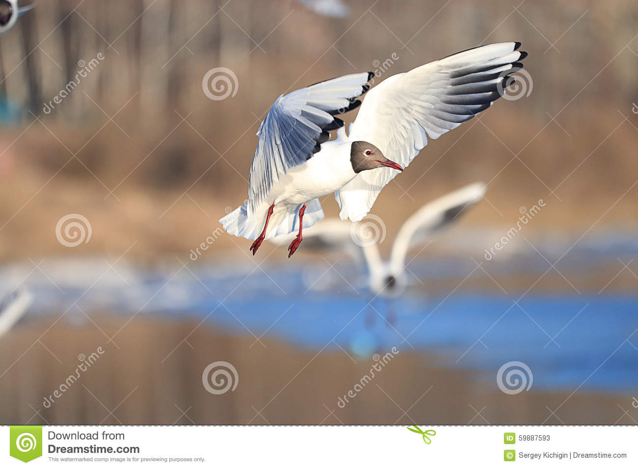 Seagull flying above water