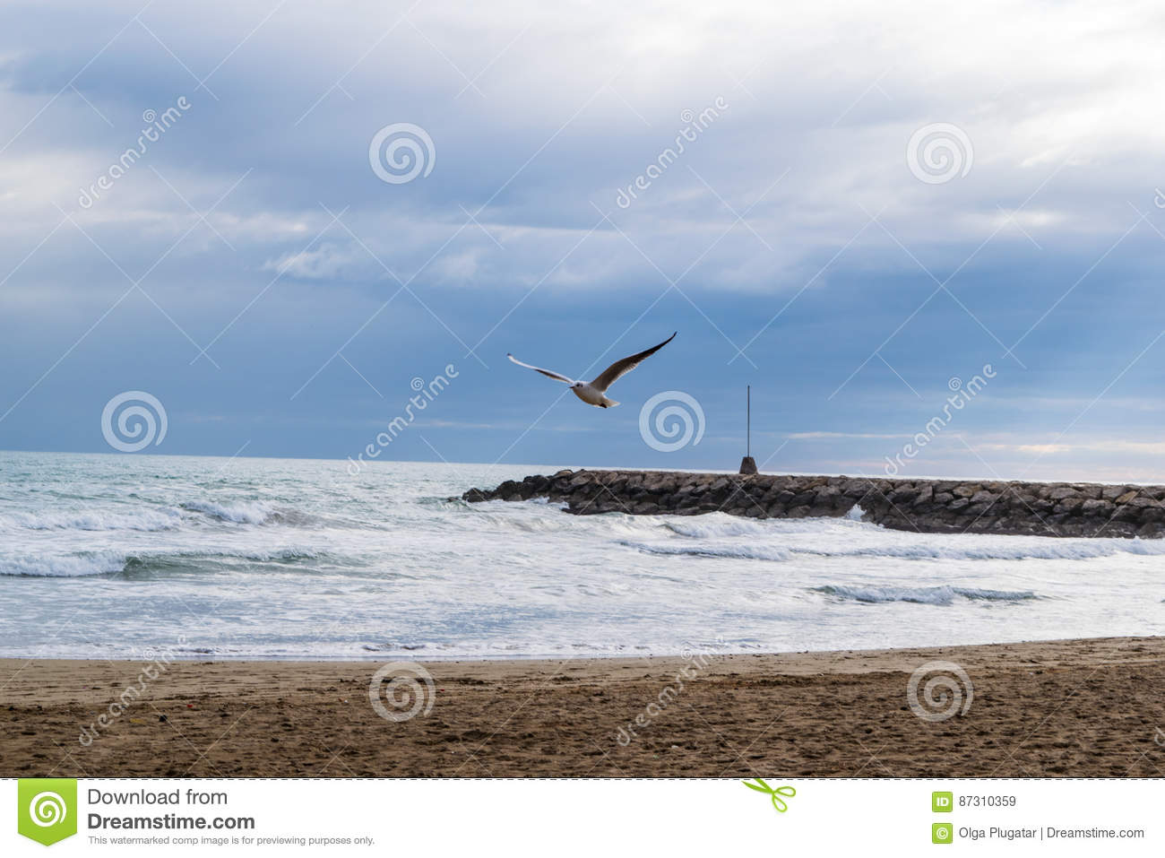 Seagull flying against blue dramatic cloudy sky