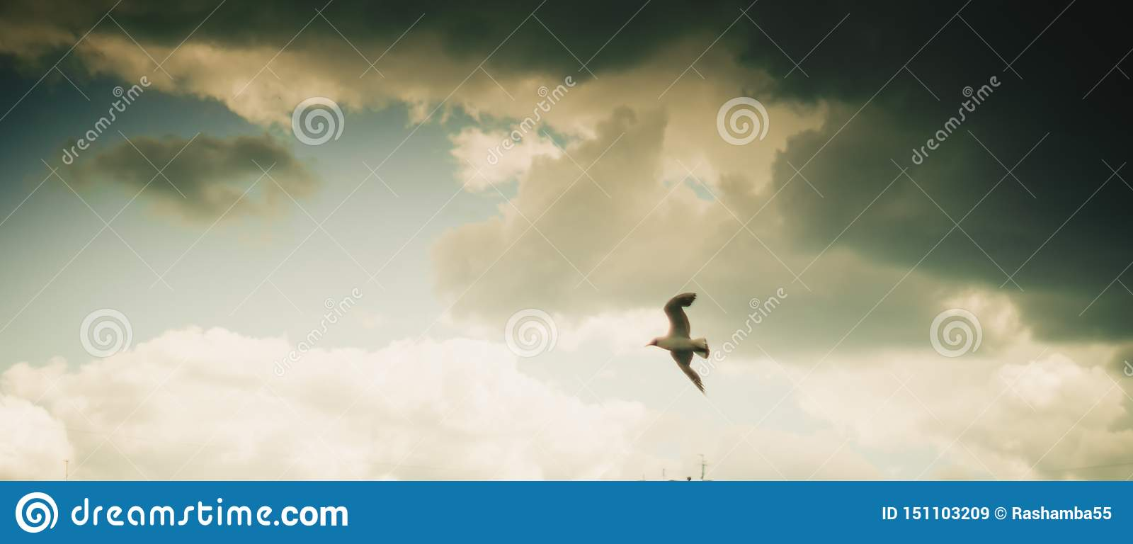 Seagull flying on cloudy beautiful blue sky