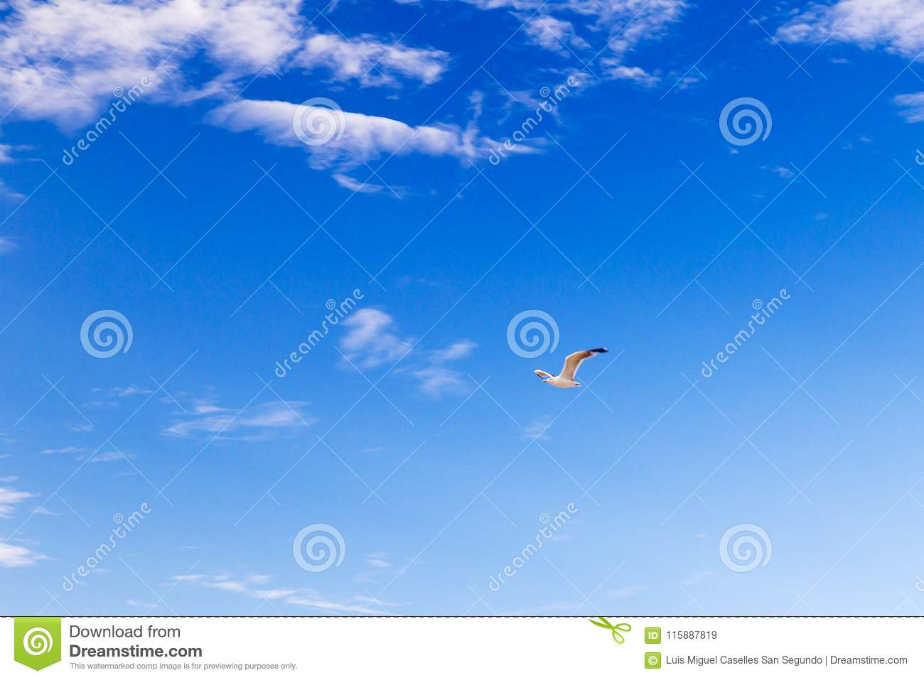 Seagull flying through the sky