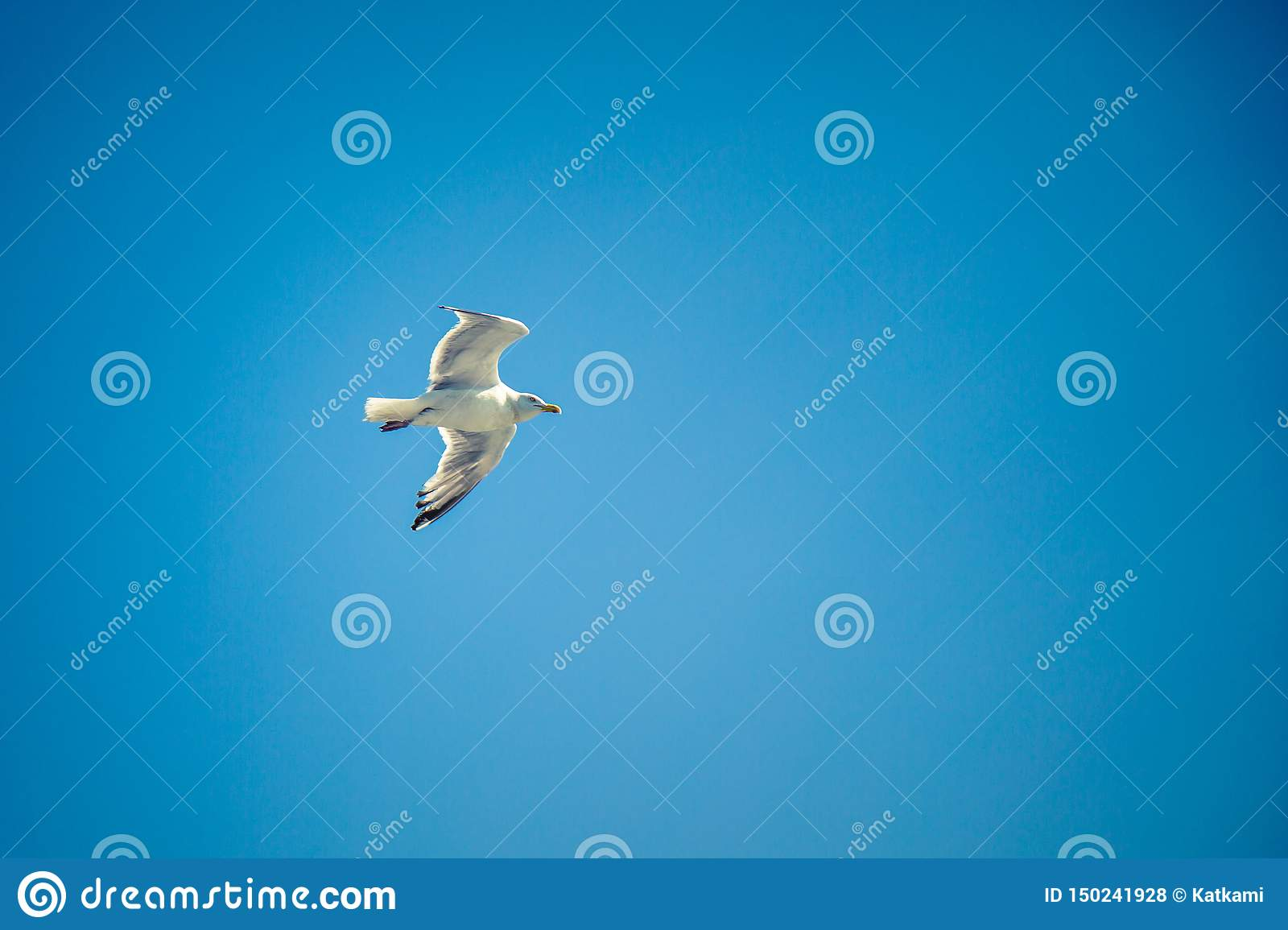 Seagull flying high in a clear blue sky