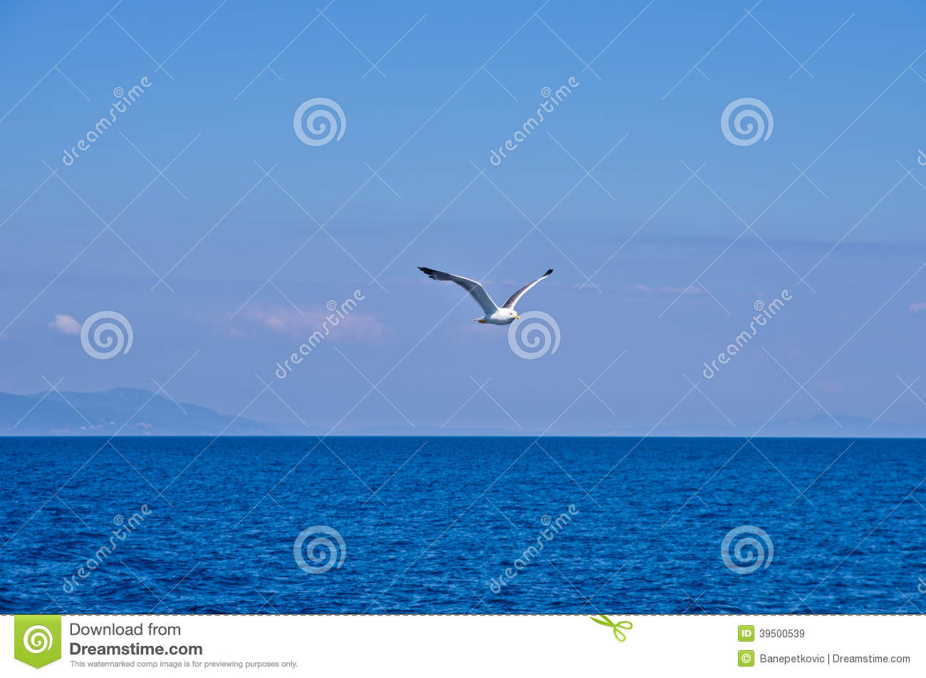 Seagull flying over Aegean sea with greek islands in background