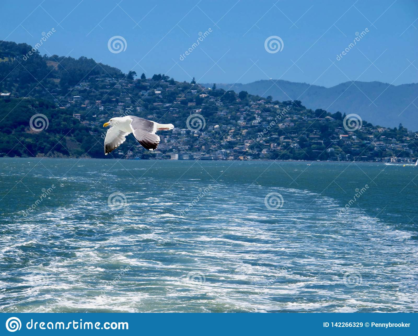 Seagull flying over ocean waves