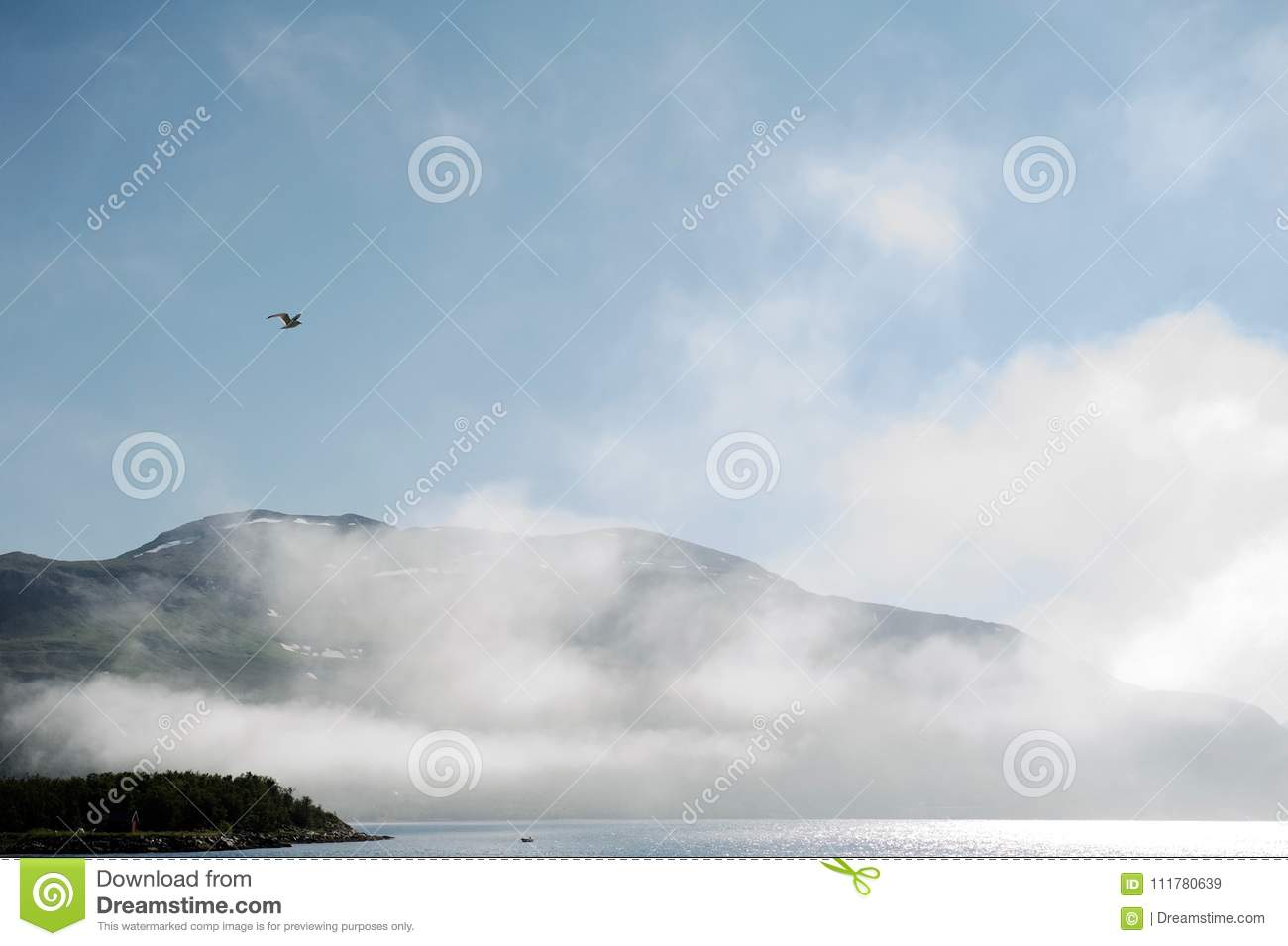 Seagull flying in the sky above cold norvegian fjord.