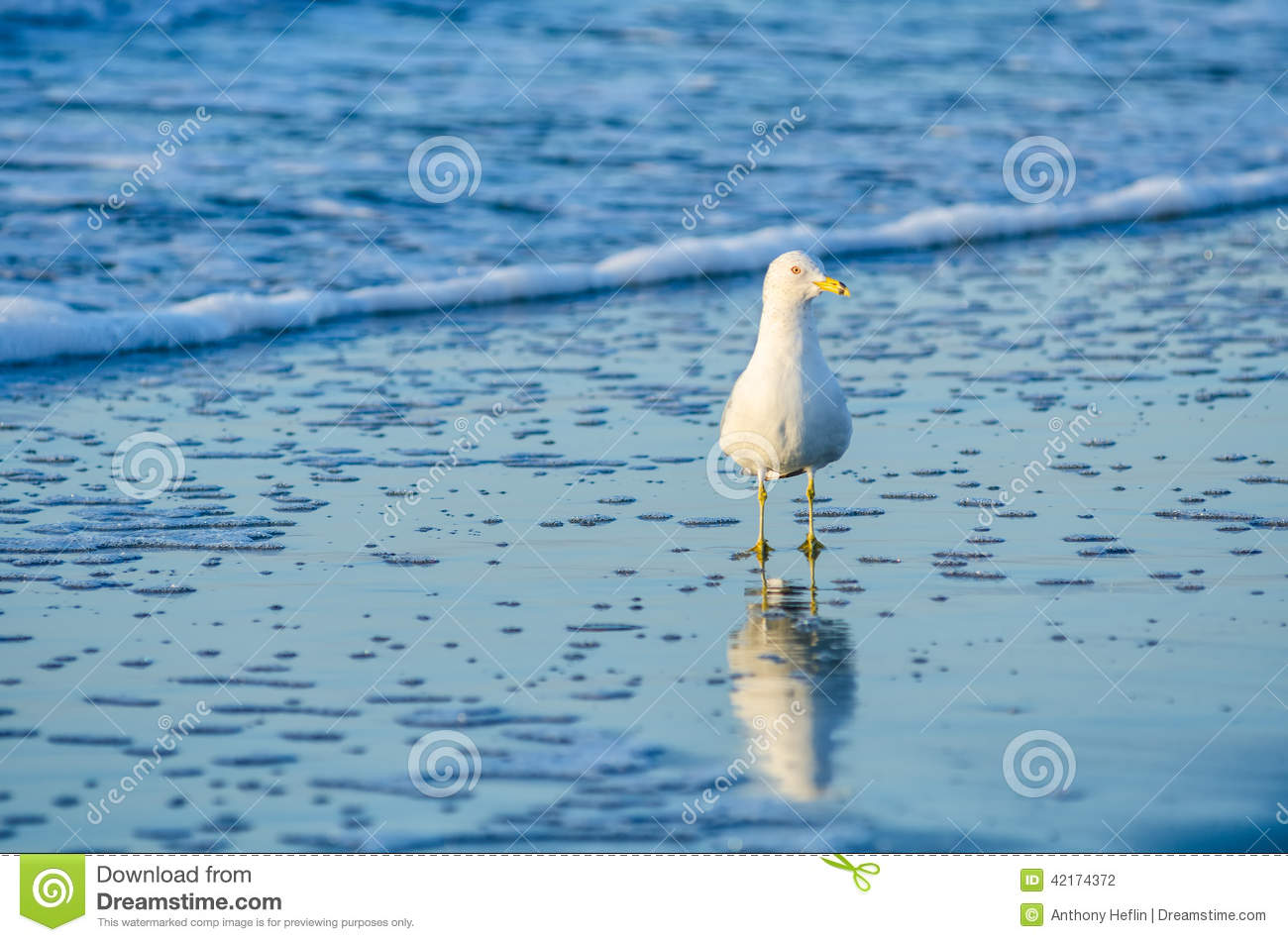 Seagull folly beach sc stock photo image 42174372 for 3d dreams fort mill sc