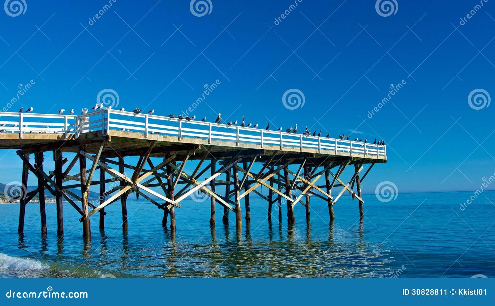 Seagull Gathering Pier