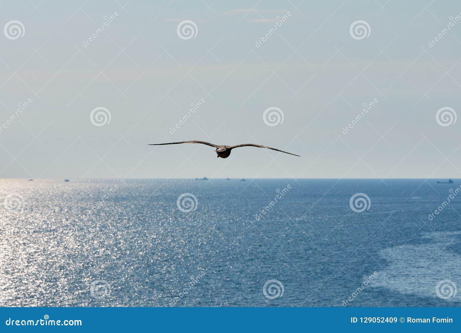 Seagull i flyg