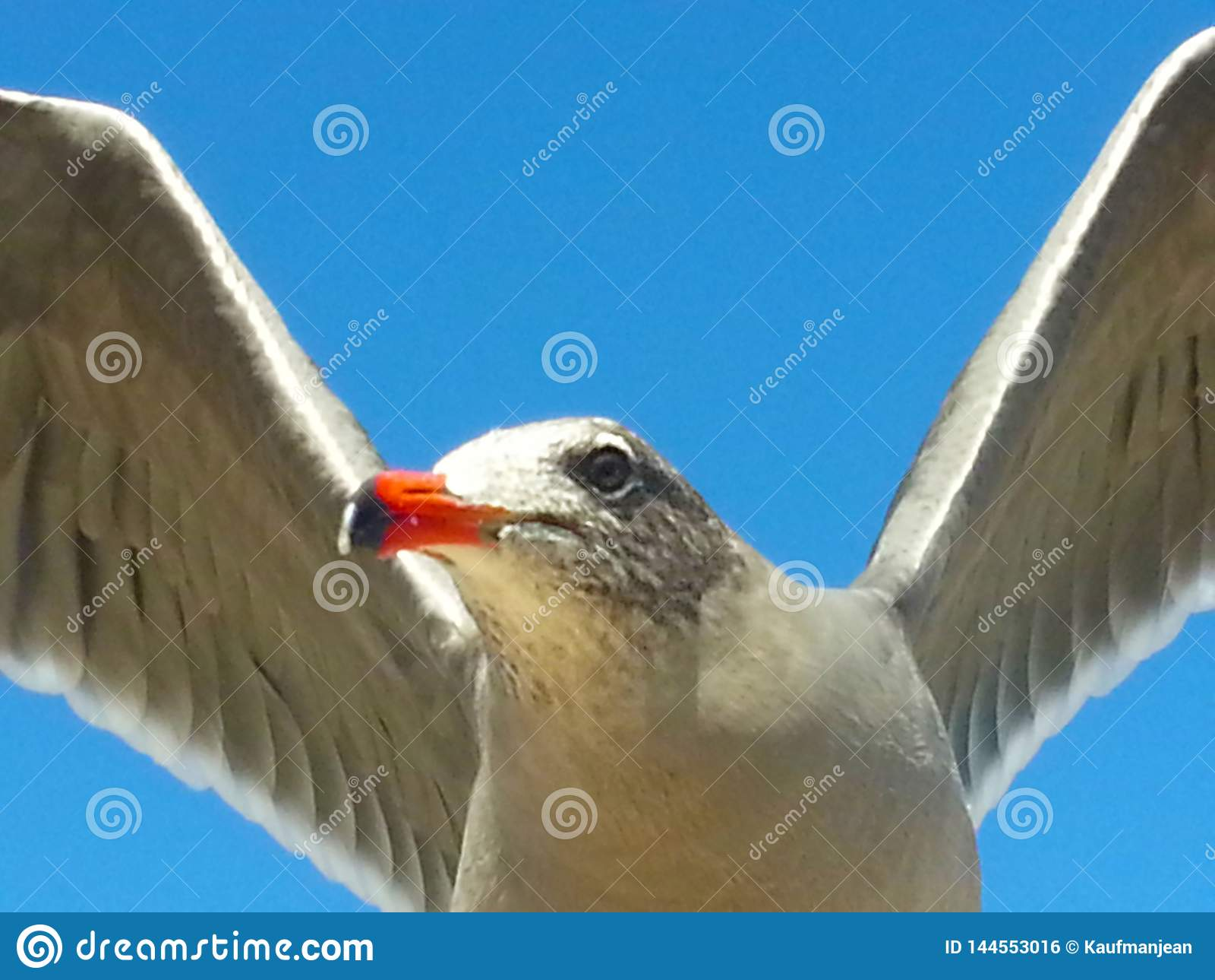 Seagull komarnicy niebieskiego nieba skrzydła otwierają zakończenie w górę pomarańczowego belfra