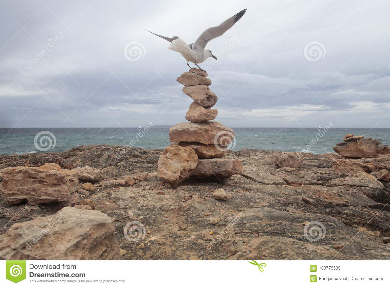 Seagull landed over stone mounts in the south coast of the island of majorca