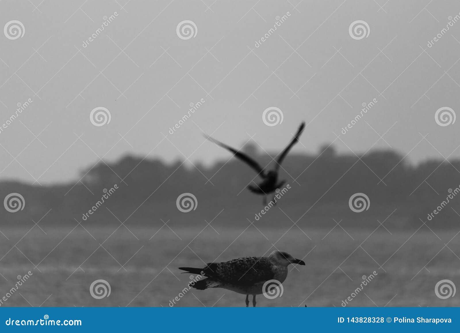 Seagull lata nad morzem drugi siedzi