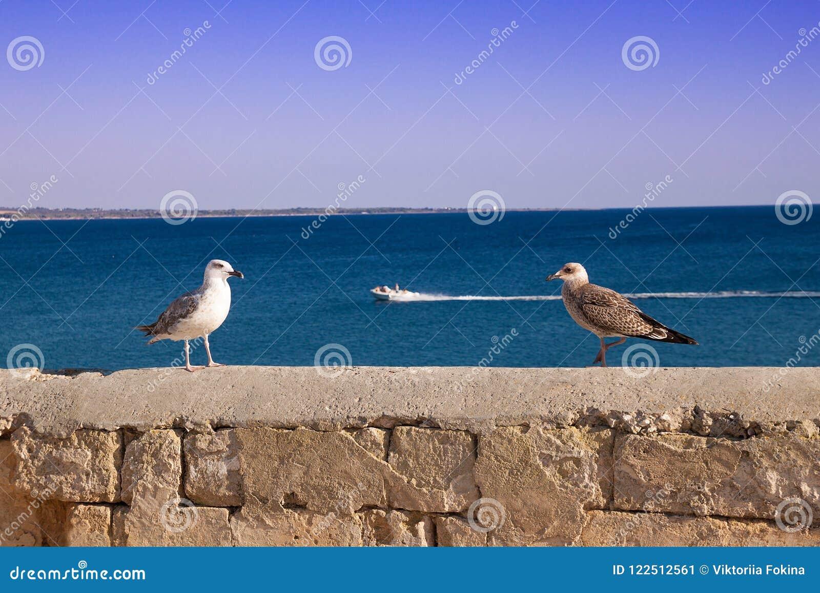 Seagull med fågelungen på bakgrunden av havet