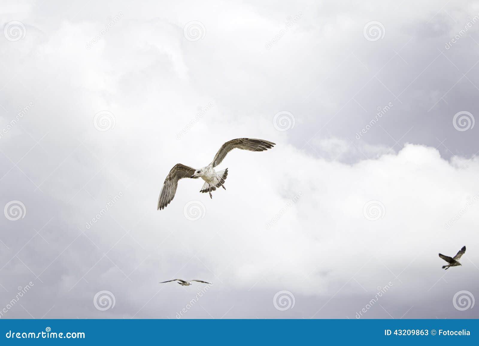 Download Seagull med himmel fotografering för bildbyråer. Bild av fritt - 43209863