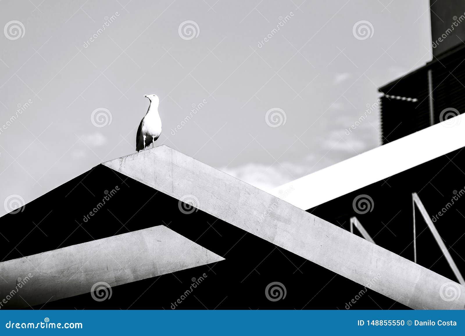 Seagull na budynku, czarny i biały