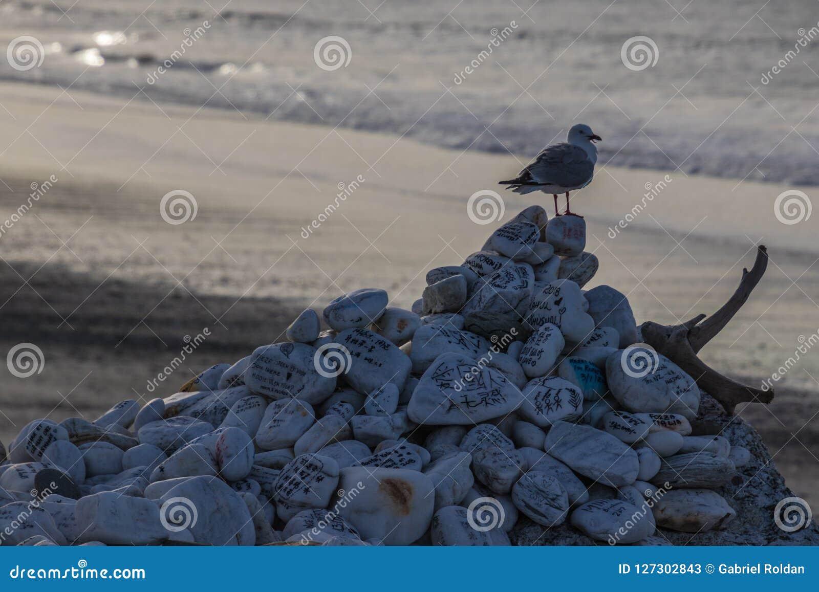 Seagull na rozsypisku skały na plaży