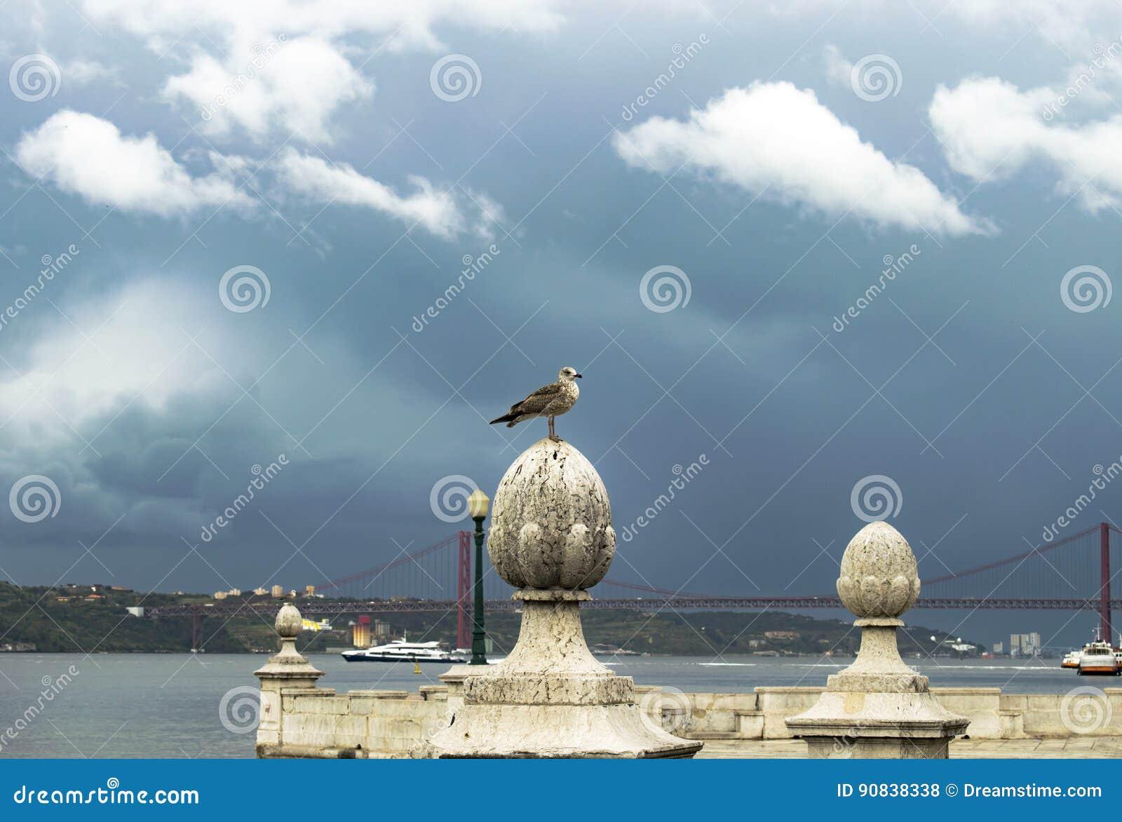 Seagull na rzece