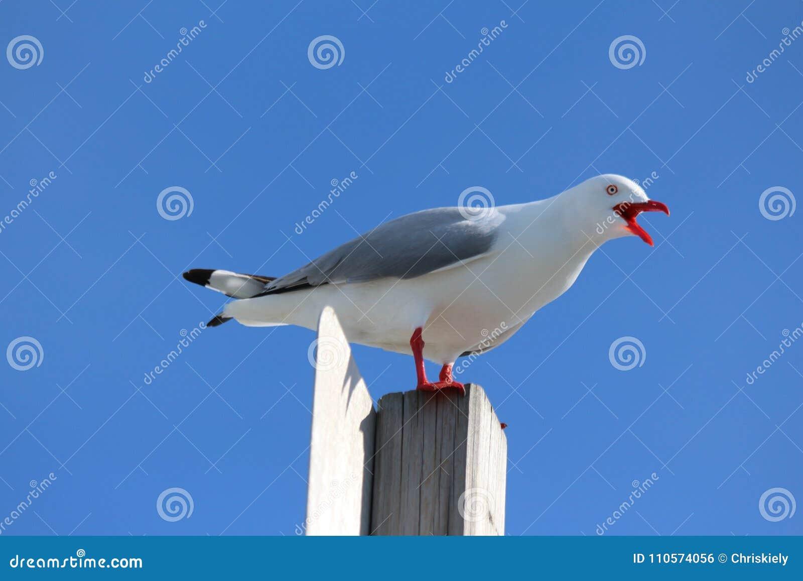 Seagull na słupie