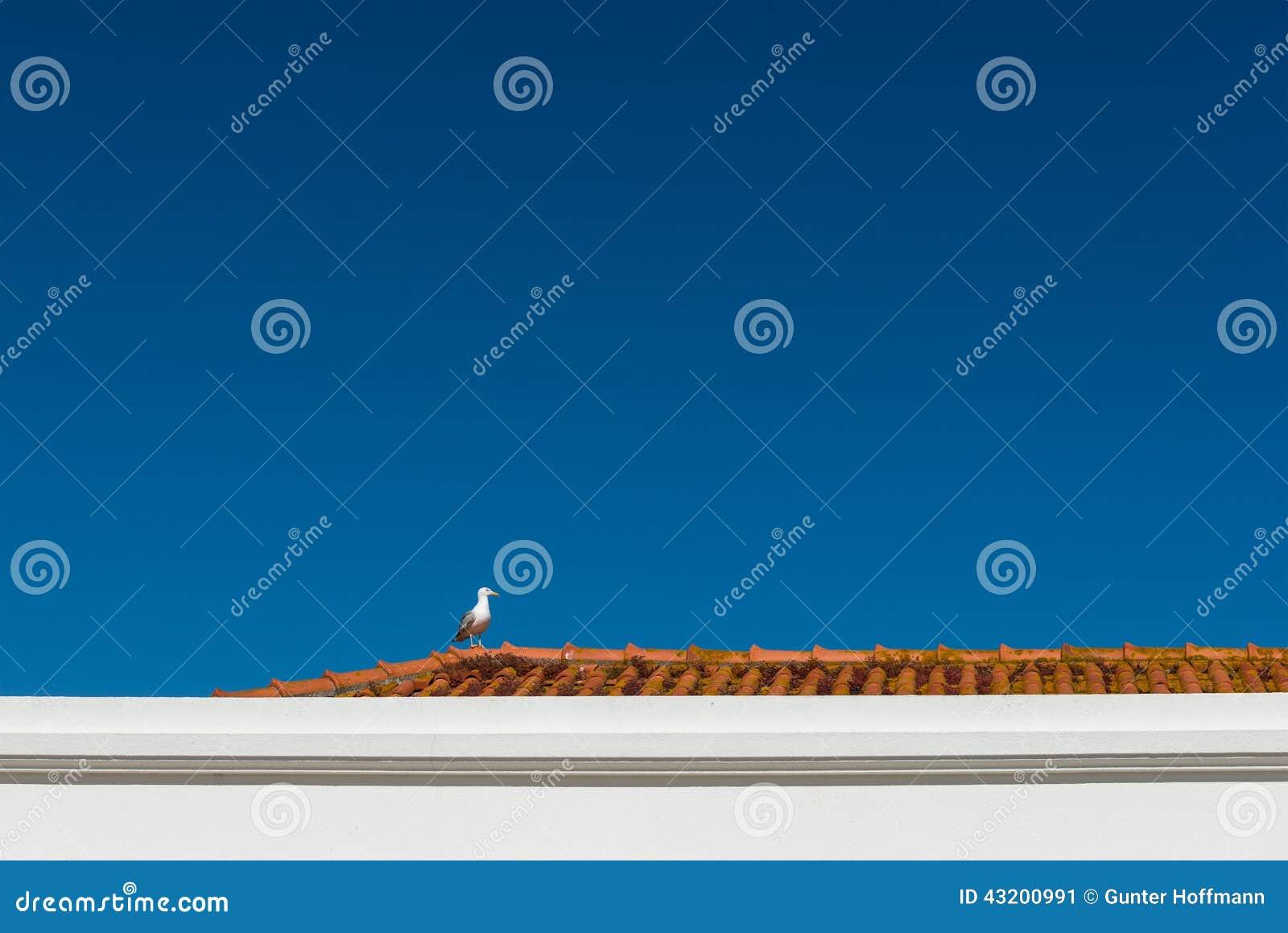 Download Seagull På Ett Rött Tak, Nazare (Portugal) Fotografering för Bildbyråer - Bild av seagull, rött: 43200991