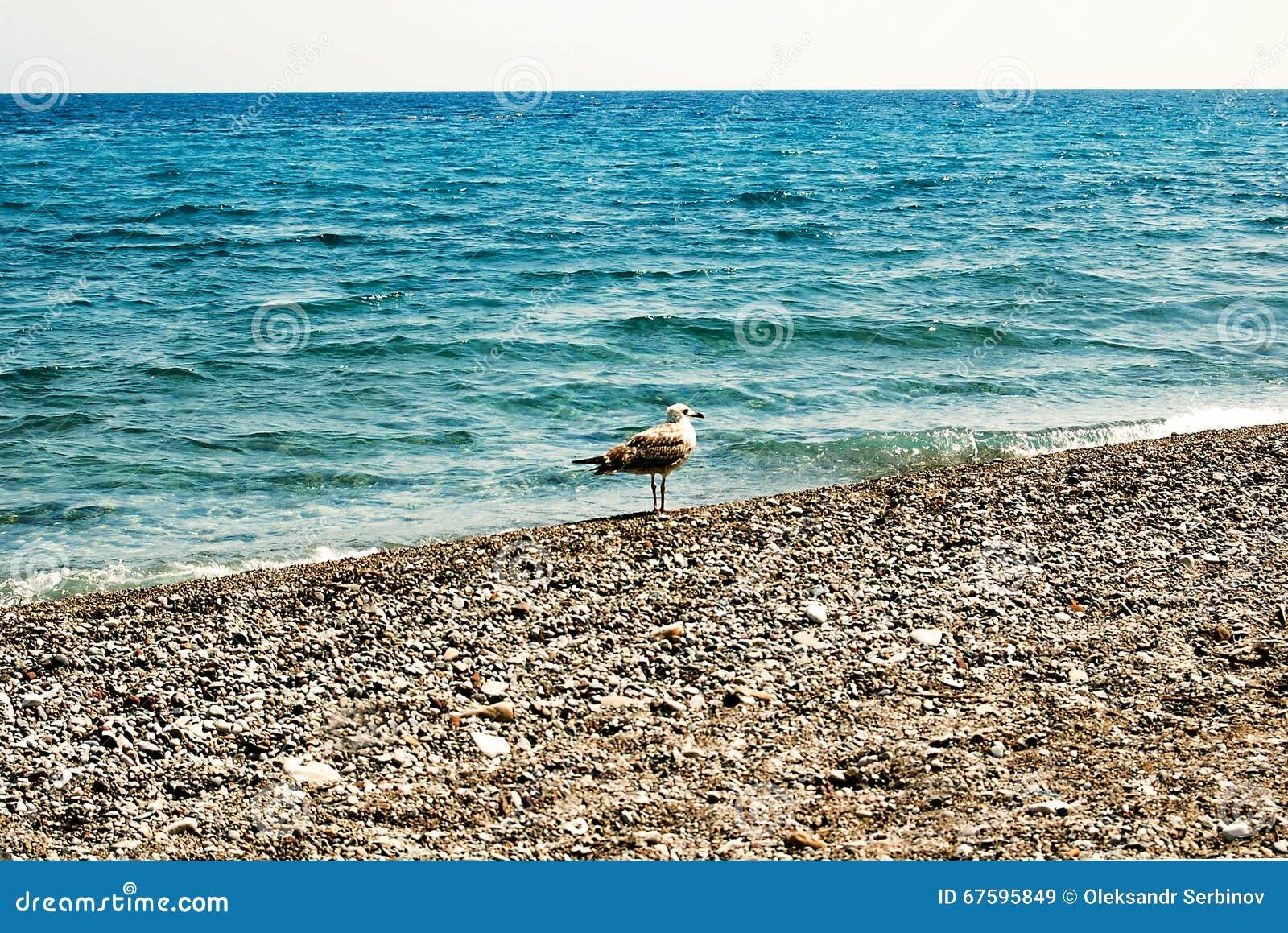 Seagull på kust