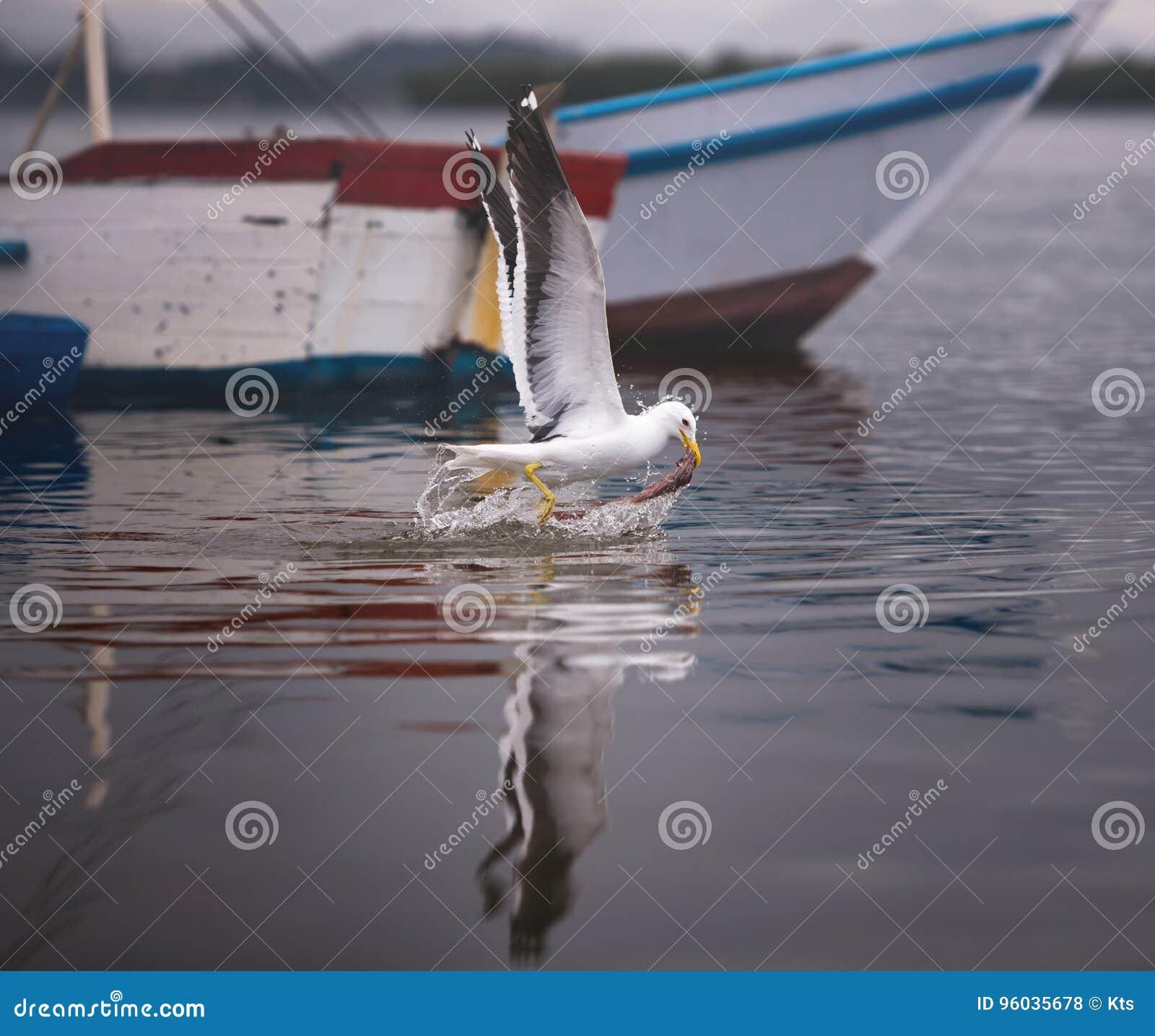Seagull połów Na morzu