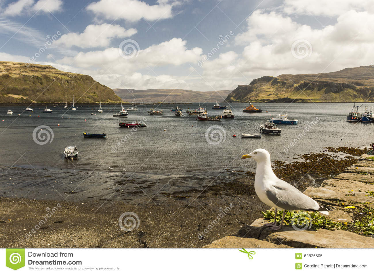 Seagull In Portree Harbour Editorial Image Image Of