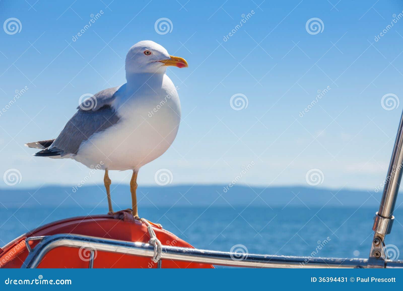 Seagull pozycja na pomarańczowym lifebelt