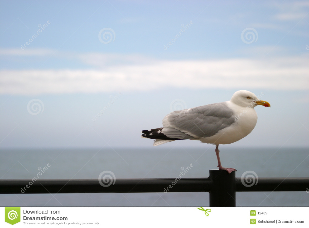 Seagull on railing